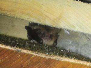 Bat Box Scheme update